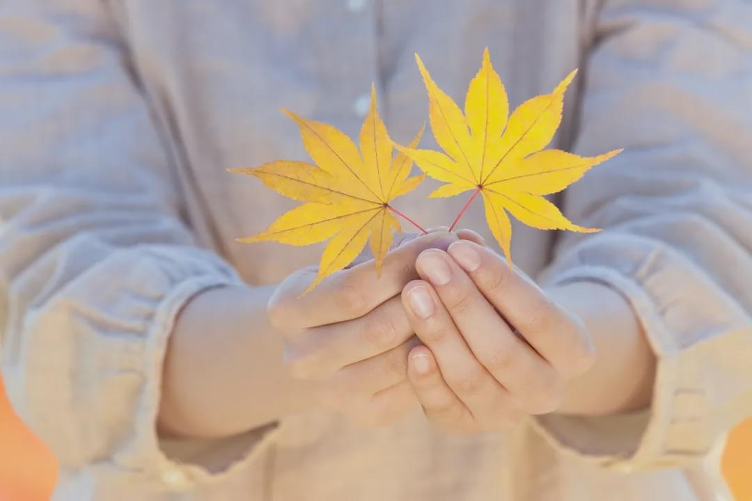 寒露连深秋,会养的人不怕秋